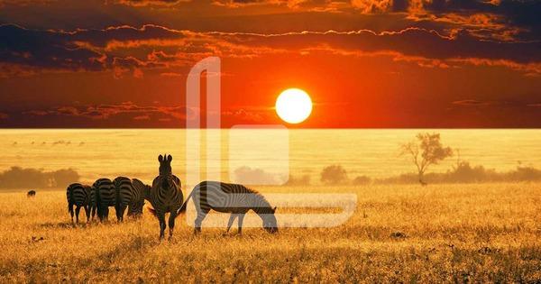 Africa - Iberoamerica viaggi Roma